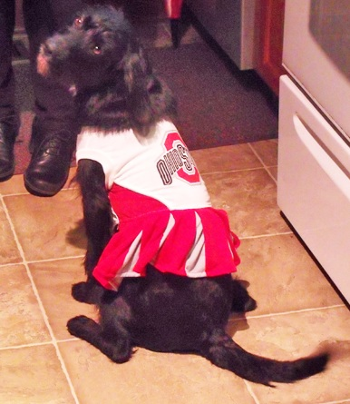 My dog dressed as an Ohio State Cheerleader! Go Bucks!